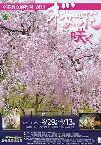 koutosyokubutusakura-2_R.jpg