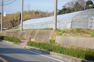 20110314_00001_R-thumbnail2.jpg